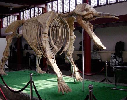 Platybeladon, Gajah Purba Yang Mirip Monster