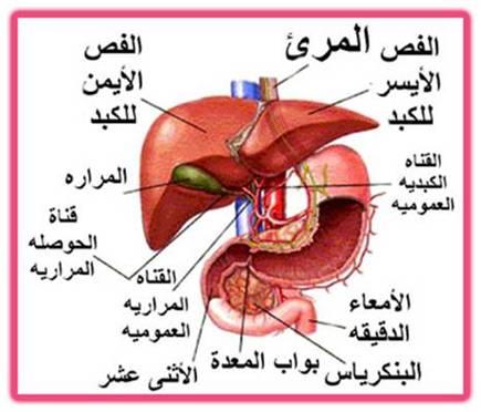 الاسباب الرئيسية الخطيرة لتلف الكبد و مرضه و اسباب مرض الكبد | عادات يومية تسبب تدمير الكبد  لمعلوماتك