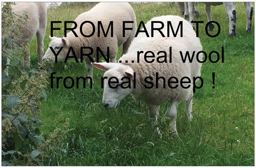 REAL WOOL FROM REAL SHEEP