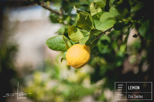 Zitronen im sisterMAG Nr. 7