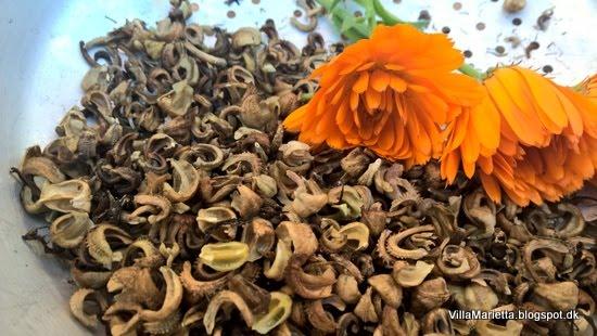 Tid til at høste frø fra haven