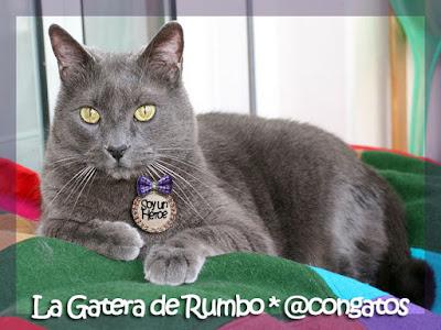 Gato Héroe Gatera Rumbo