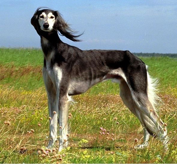 All list of different dogs breeds types of dogs with for What type of dog is this