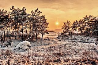 Imagini de iarna in Romania