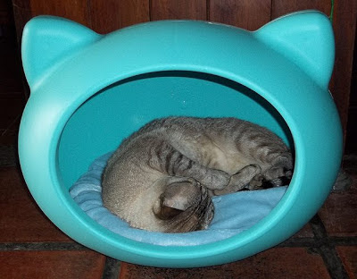 Cat Cave, Guisa Pet