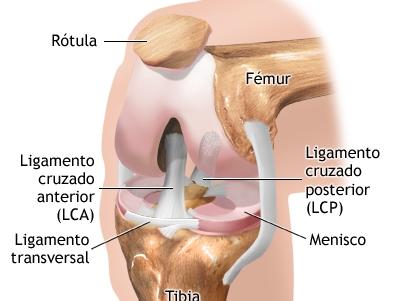 SALUTARIS MEDICAL CENTER: Cirugia de ligamentos de rodilla en ...