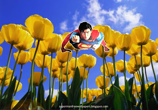 Wallpaper of Superman super sonic speed flying at Tulips Flowers Field Desktop wallpaper