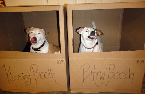 doggy kissing booth
