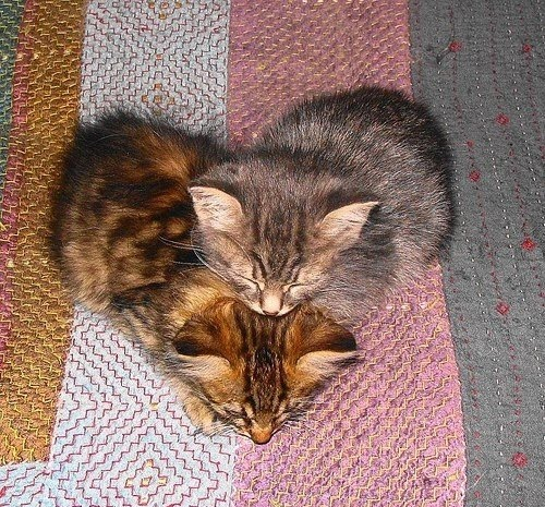 Two kitten forming heart shape