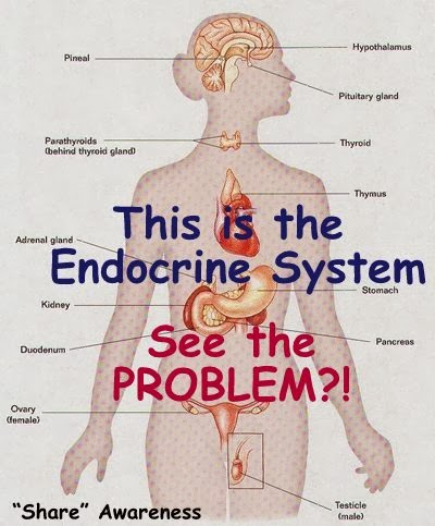 The Endocrine System - 101