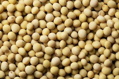 Pengertian Kacang Kedelai dan Kandungan Nutrisinya Dalam 100 gram