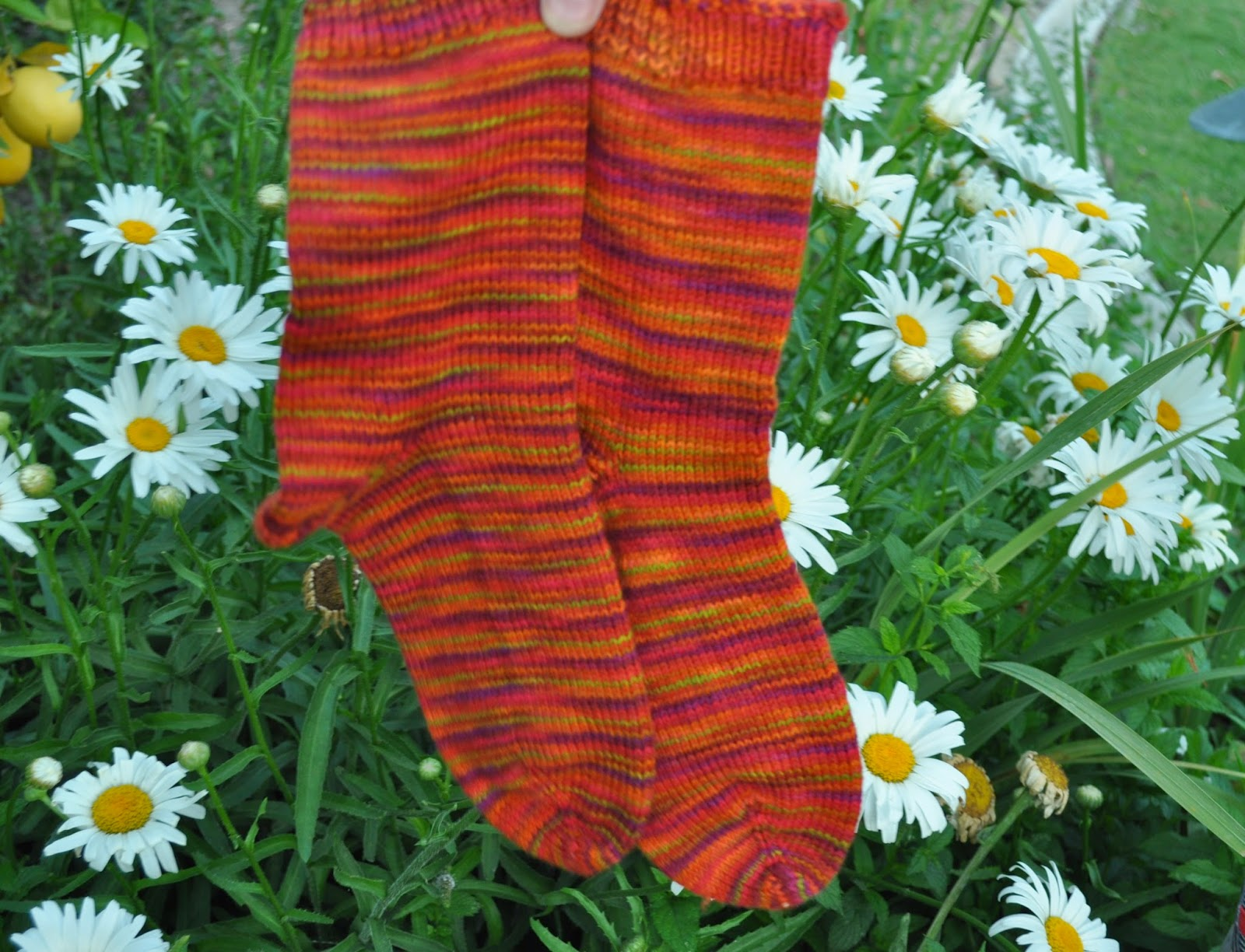 Mountain Colors Handpainted yarn Poppy Trail
