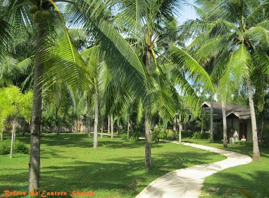 Camotes Island - Mangodlong Paradise Resort's coconuts