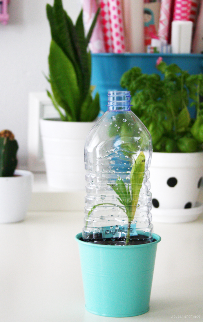 Luloveshandmade mini upcycling diy plastic bottle greenhouse for Diy plastic bottle