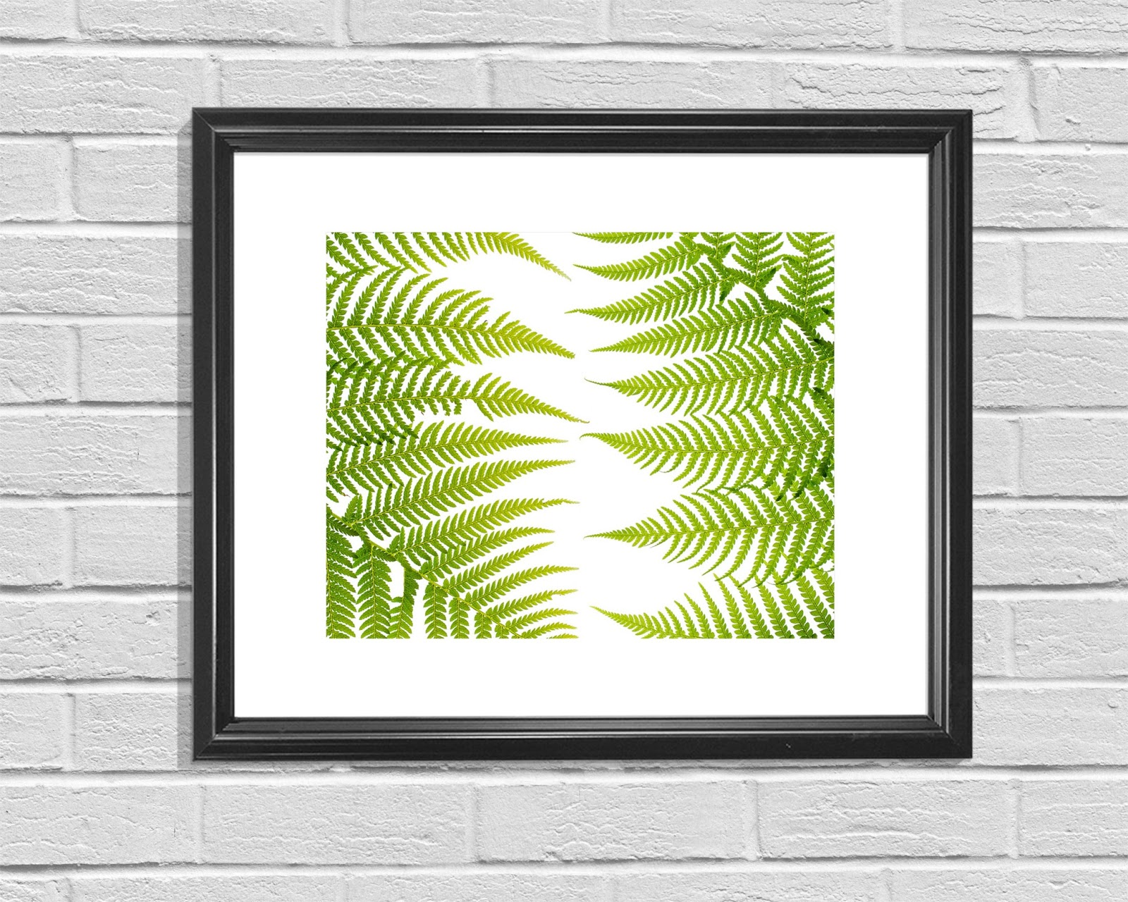 Fern, Potted Fern, Fern Decor, Fern House Plant