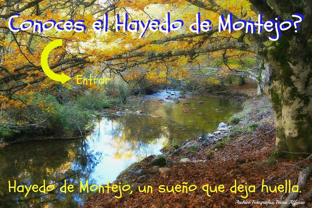 Hayedo de Montejo