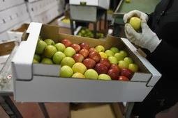 Znate li kako prati i čuvati voće i povrće