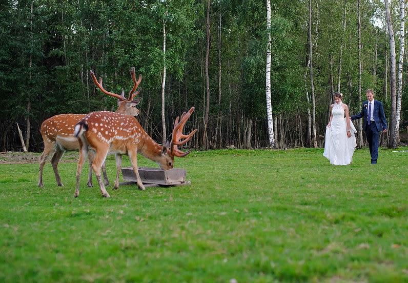 vestuvės su elniais