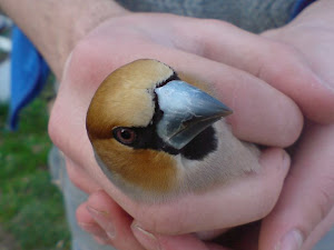 Bird Banding in Bulgaria