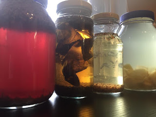 A selection of vodkas steeping in assorted jars. Here: lavender, basil, coriander, ginger.