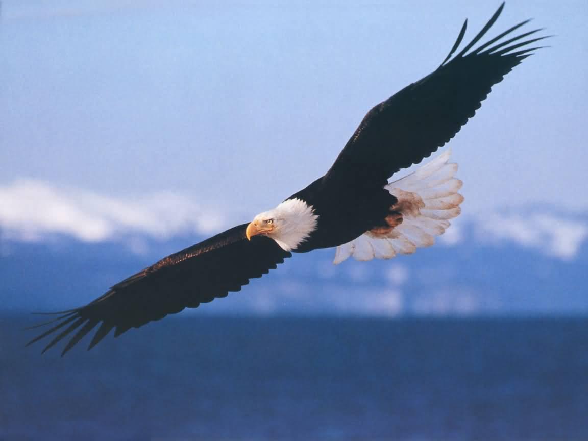 image gallery of zeus greek god symbol eagle