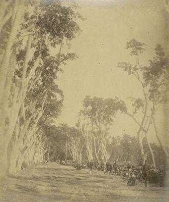 Jalan+Ampenan-mataram+1894.jpg