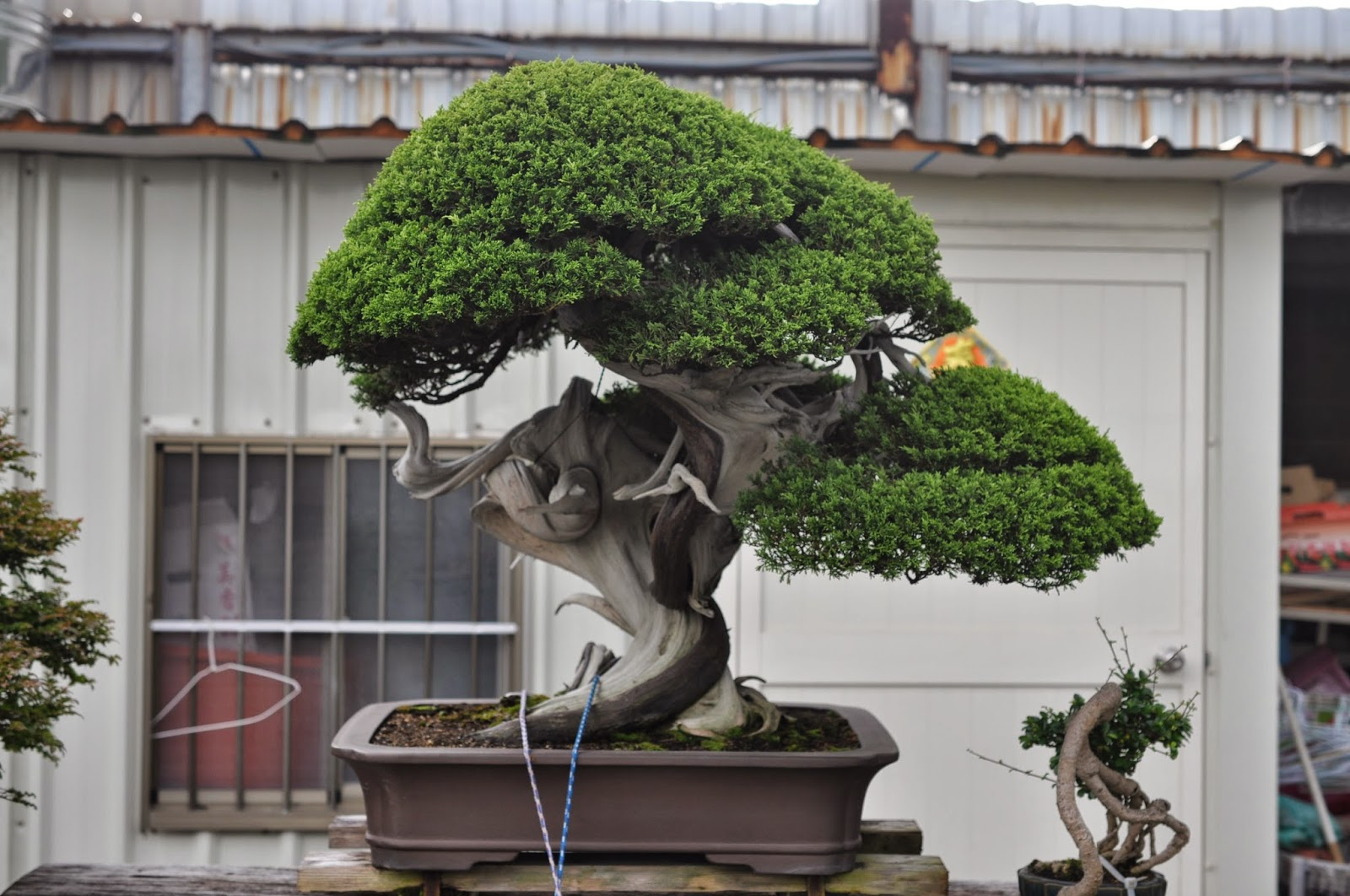 All In One Bonsai And Ceramics Bonsai Nurseries In Taiwan