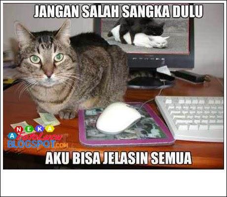 Foto lucu, Gambar lucu kucing Jangan Salah Sangka Dulu