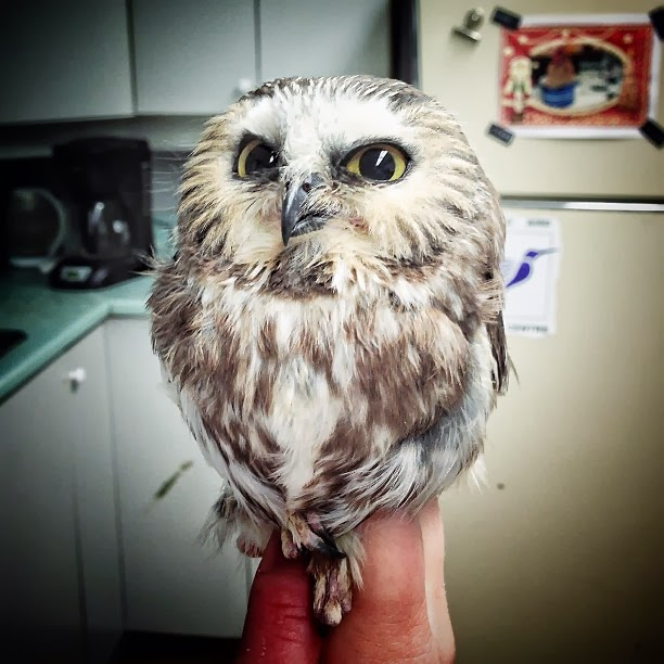 Funny animals of the week - 7 February 2014 (40 pics), owl looks suspicious