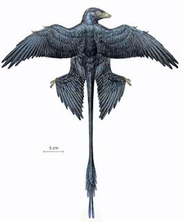 Bulu burung dinosaur Microraptor berkilauan