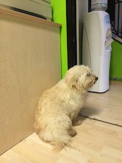 Βρέθηκε στο Άνω Λαγονήσι αρσενικό σκυλάκι χωρίς κολάρο