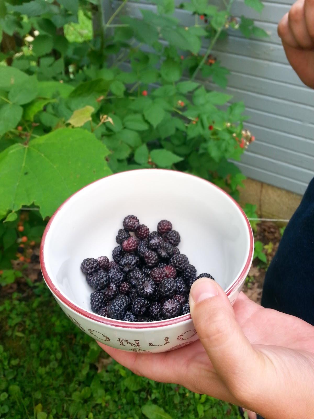How to Make Raspberry #Jam