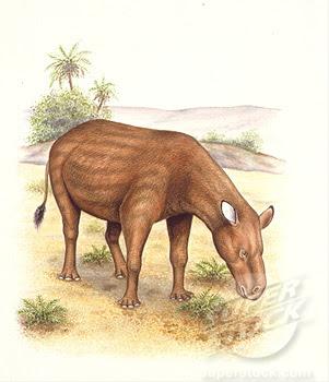 perisodactilos de hace millones de años Heptodon