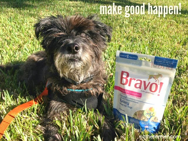 Oz the Terrier says Bravo Pet Foods makes good happen with Homestyle Complete Raw Dinners for Dogs