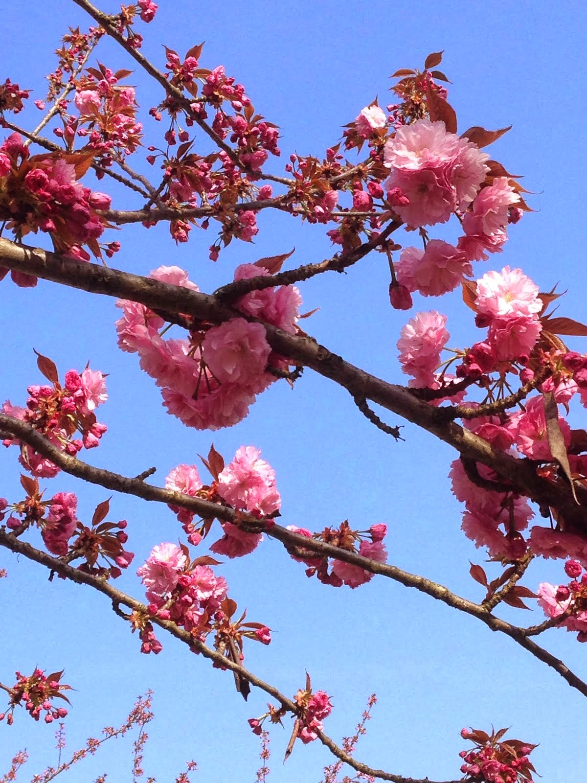 Primavera !!!