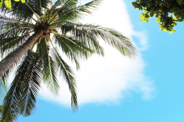 Bangkok Airways launches campaign to grow coconut trees to promote tourism