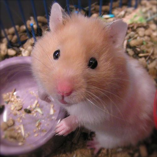 http://3.bp.blogspot.com/-DpmidkUvmXQ/TZlsAZUXW9I/AAAAAAAAAB4/IJu7FDHSQ-A/s1600/hamster-bowl.jpg