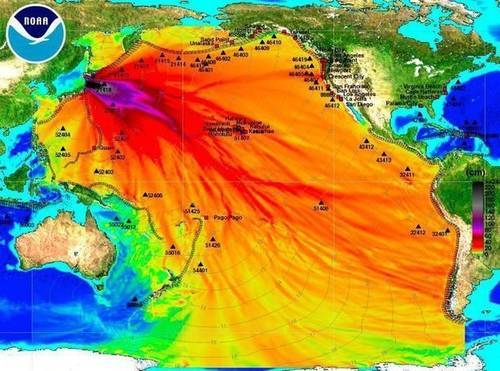 Fukushima still being ignored experts reveal problems on for Pacific ocean radiation fish