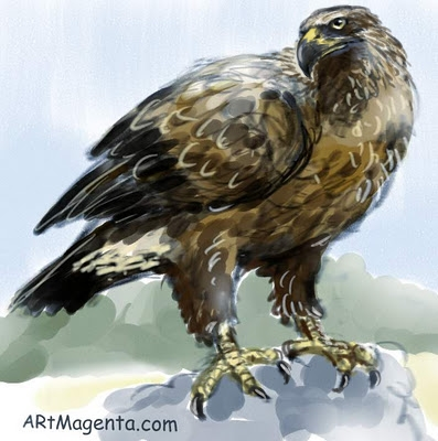 Golden Eagle  sketch painting. Bird art drawing by illustrator Artmagenta