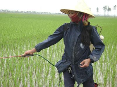Menerapkan keselamatan dan Kesehatan Kerja Dalam Belajar Pertanian Organic