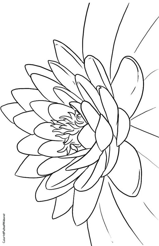 Lotus flower coloring page flower coloring page get lotus flower coloring page and make this wallpaper for your desktop tablet or smartphone device for best results you can choose original size to be mightylinksfo