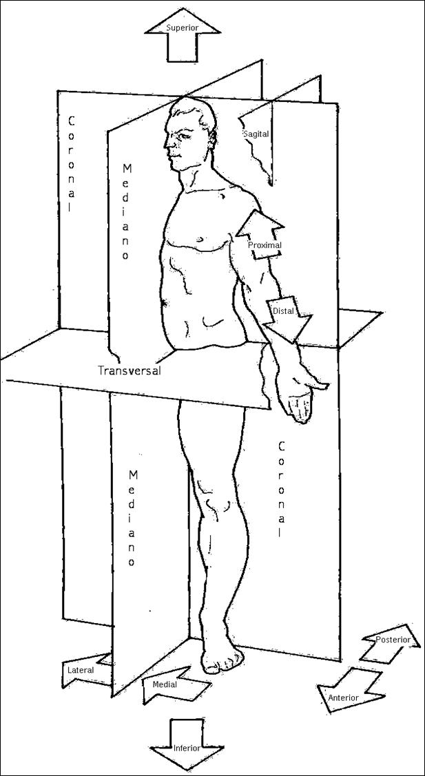 ANATOMIA Y FISIOLOGIA HUMANA: TERMINOLOGIA, PLANOS Y POSICION ANATOMICA