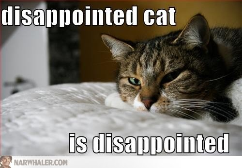 disappointed-cat-is-disappointed-lolcats