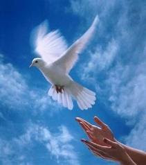 poemas+de+paz+paloma