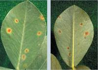 how to get rid of mold on plant leaves