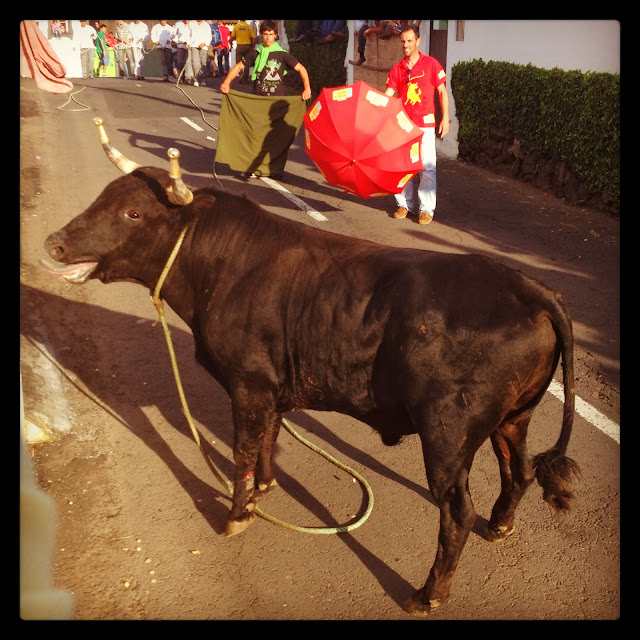 Street bullfight in Terceira, Azores, Portugal, on Semi-Charmed Kind of Life