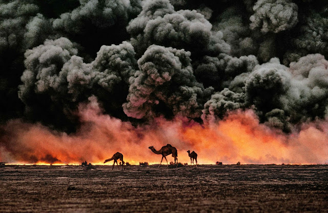 Camels against the blackened sky of Gulf War oil fires in Kuwait.