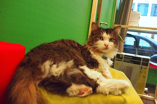 cat cafe brussels le chat touille