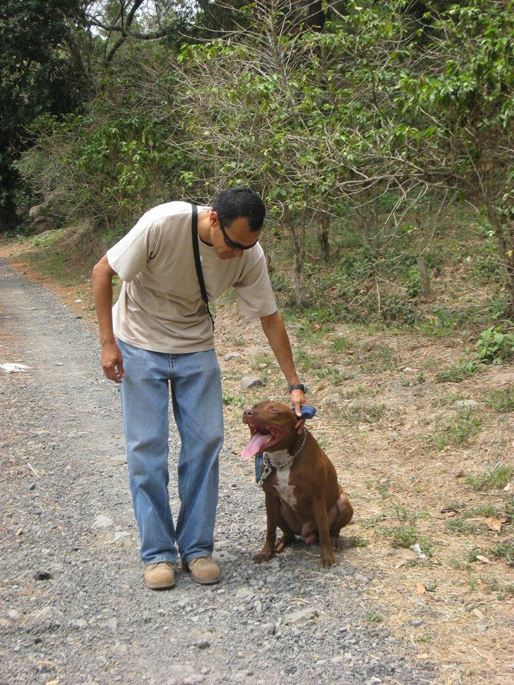otra raza canina más controversial que el American Pitbull Terrier