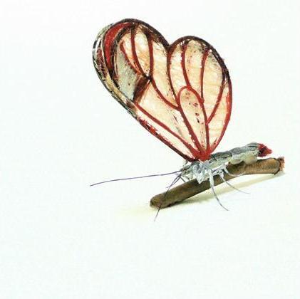 لوحات فنية لأوراق الشجر وبعض الأعمال الفنية من شعر  Hair-insects9